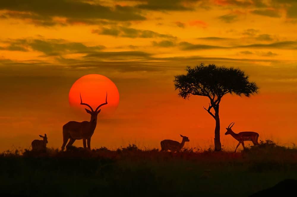 7 experiências para viver na África do Sul